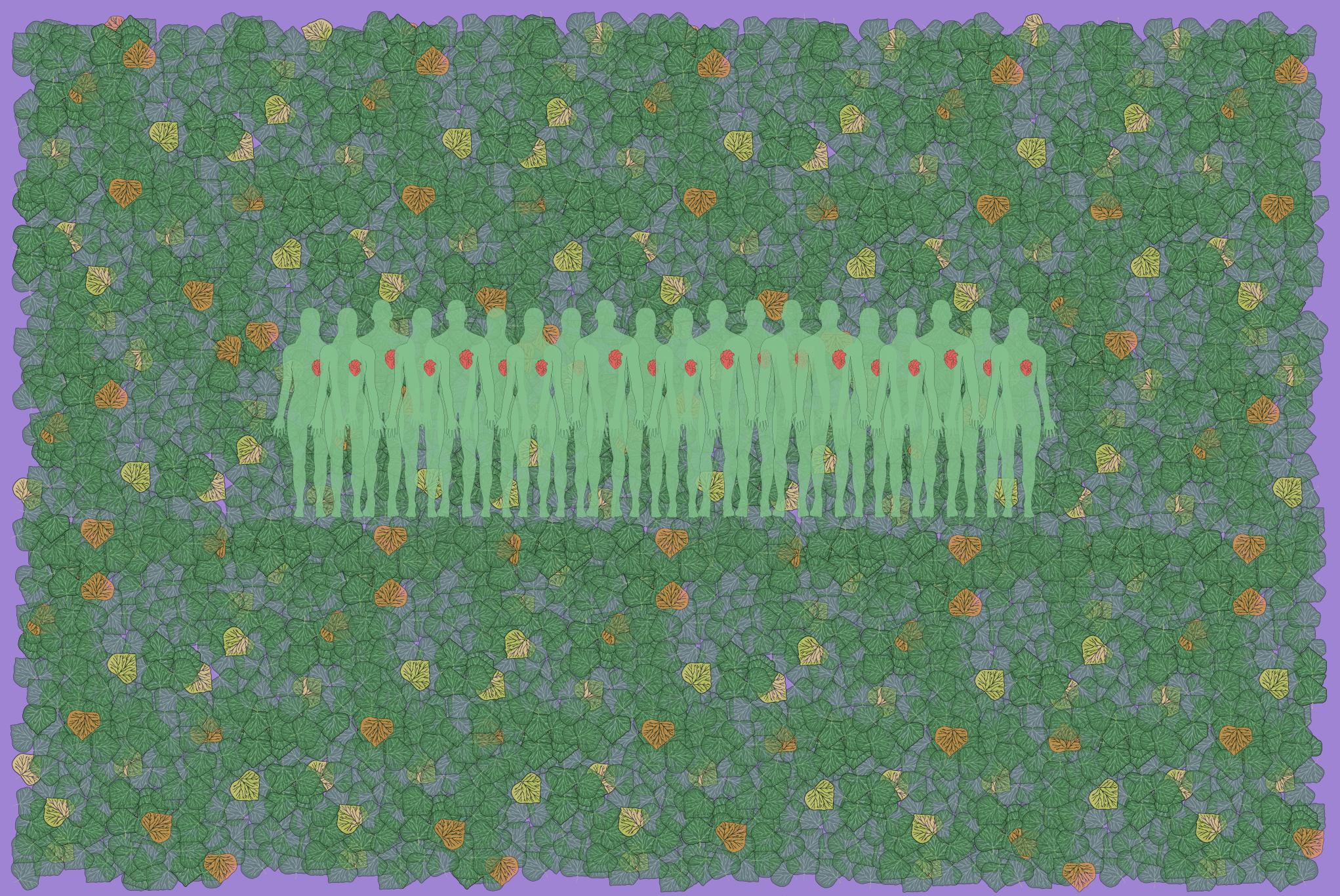 Descodificación formacion